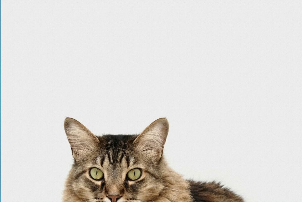 10 things you didn't know about cats